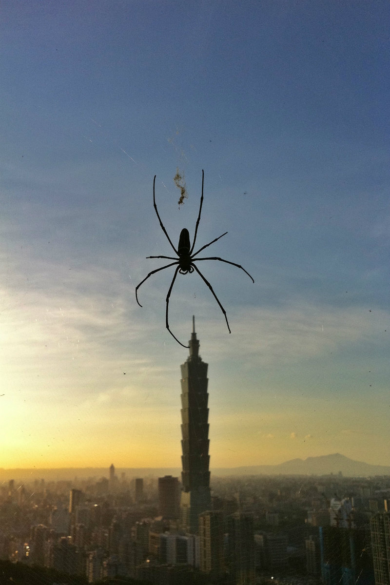 3-spider-and-taipei-101-singgirl-on-flickr