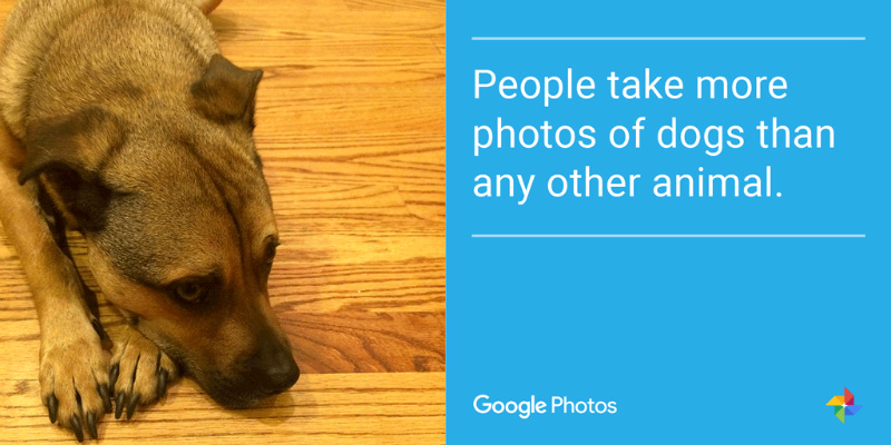 things-to-know-about-google-photos-dog