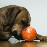 【全球首創】活動式寵物攝影機,讓 PlayDate 當毛孩子的好夥伴 !